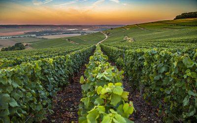 Grand Tour Champagne 2020